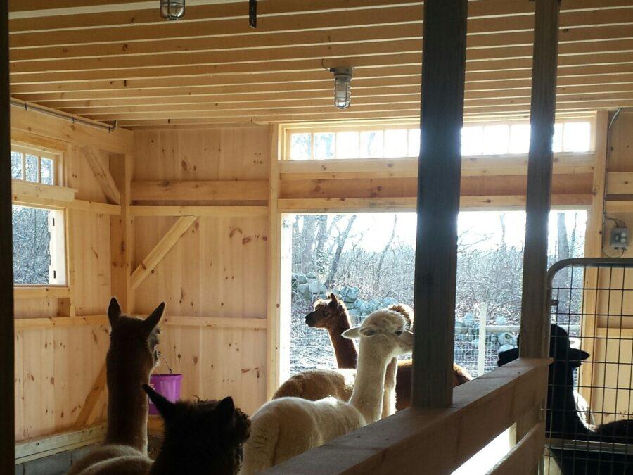 Post and Beam animal Barn